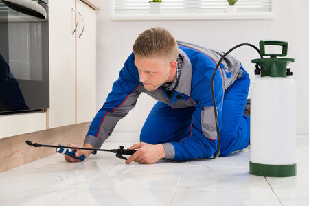 When is it Time to Call a Professional Exterminator?