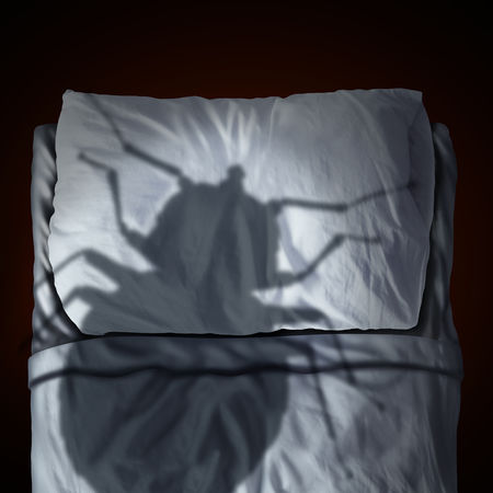 Heat – The Solution For Bed Bugs