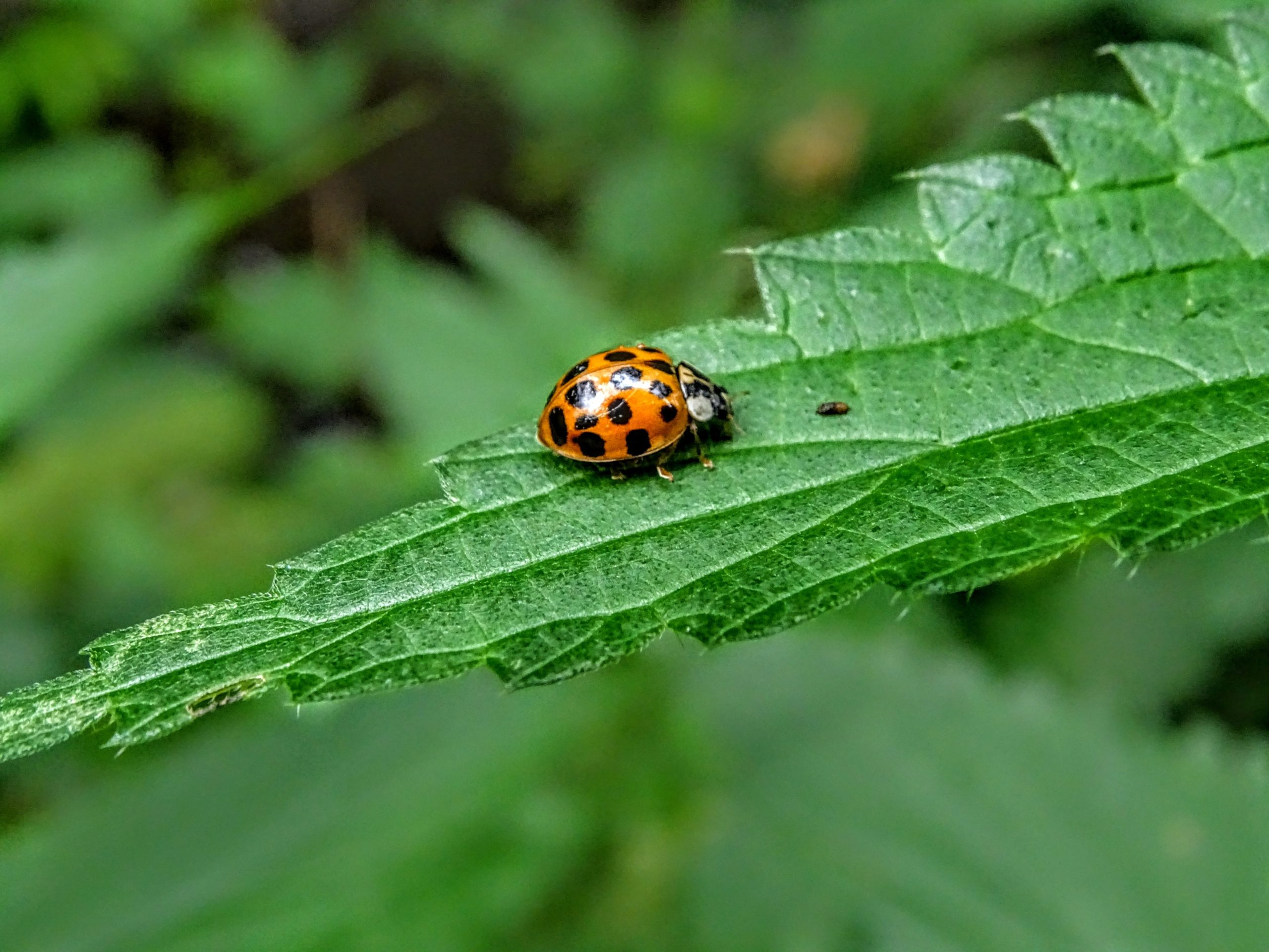 How to Prevent Ladybug Swarms