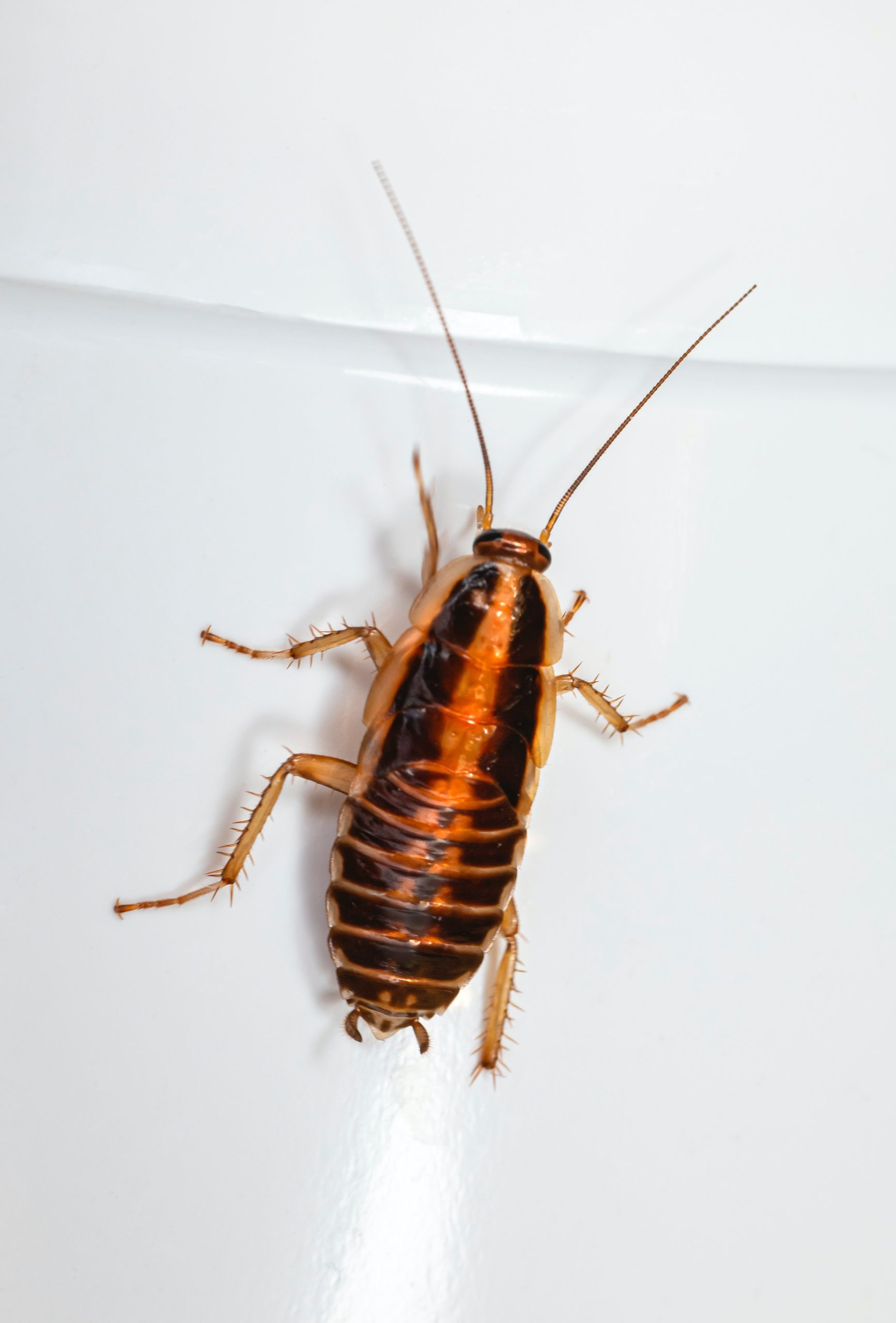 How to Keep Cockroaches Away?